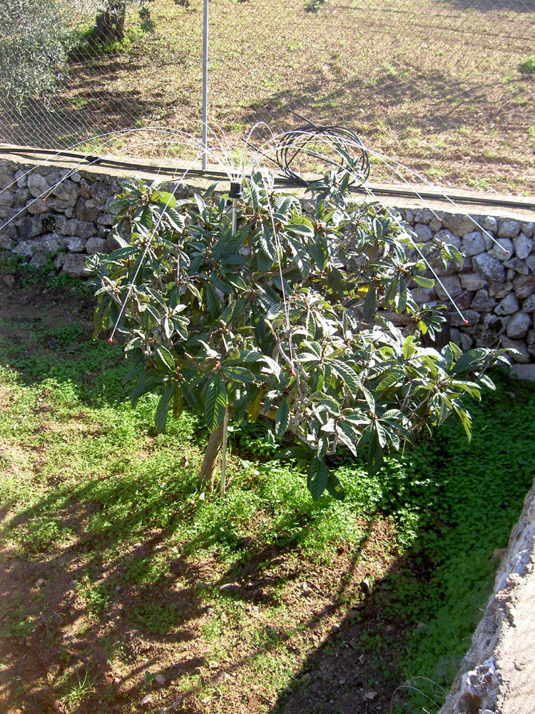 Scarecrow for garden and balcoinies